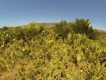 Palmiers, cactus et fleurs de désert images stock
