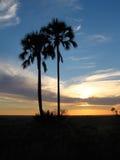 Palmiers ciel et nuages Photos libres de droits