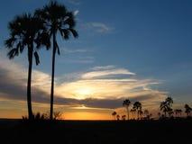 Palmiers ciel et nuages, plus de palsm Photos stock