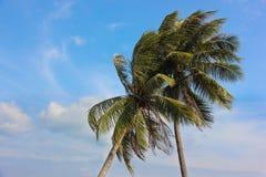 Palmiers contre le ciel Photographie stock libre de droits
