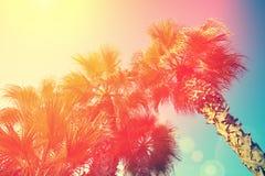 Palmiers contre le ciel Photo stock