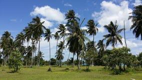 Palmiers contre le ciel Photos libres de droits