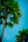 Palmiers contre le ciel bleu photos libres de droits