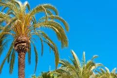 Palmiers contre le ciel bleu, Sitges, Barcelone, Catalunya, Espagne Copiez l'espace pour le texte Photographie stock