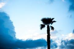 Palmiers contre le ciel bleu, palmiers sur l'arbre de noix de coco tropical de côte, arbre d'été Photographie stock libre de droits
