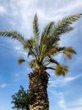 Palmiers contre le ciel bleu, palmiers sur l'arbre de noix de coco tropical de côte, arbre d'été Images stock