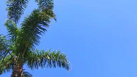 Palmiers contre le ciel bleu clips vidéos