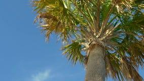 Palmiers contre un beau ciel bleu clips vidéos