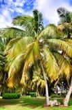 Palmiers contre un ciel bleu Photographie stock libre de droits