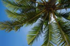 Palmiers d'été Photo libre de droits