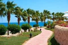Palmiers d'été sur la promenade côtière donnant sur dans l'hôtel dehors la Mer Rouge, concept de voyage en Egypte, EL de Sharm Photos libres de droits