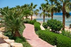 Palmiers d'été sur la promenade côtière donnant sur la Mer Rouge, concept de voyage en Egypte, Sharm el Sheikh Photo stock