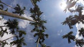 Palmiers d'enregistrement vidéo sur le fond de ciel bleu voyage, été, vacances et tropical banque de vidéos