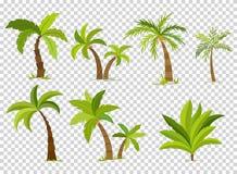 Palmiers d'isolement sur le fond transparent Illustration réglée de vecteur de bel de vectro arbre de palma illustration libre de droits