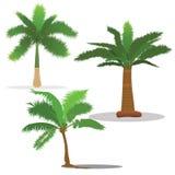 Palmiers dans différents types illustration libre de droits