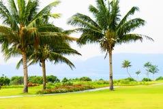 Palmiers dans Hainan Images stock