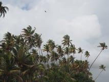Palmiers dans la brise un jour nuageux Photographie stock libre de droits