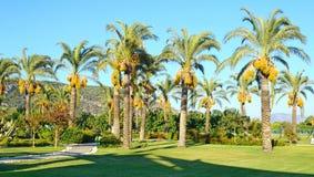 Palmiers dans la conception de paysage de l'espace public Photos libres de droits