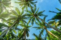 Palmiers dans la forêt tropicale Photo stock