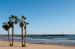 Palmiers dans la plage Images libres de droits