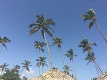 Palmiers dans la République de Domminican photos stock