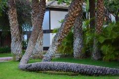 Palmiers dans la ville d'Elche dans Alicante, dans la province elx en Espagne photos libres de droits