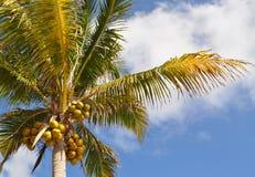 Palmiers dans le ciel Image stock