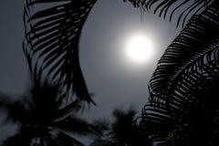 Palmiers dans le clair de lune Photos stock