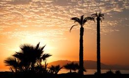 Palmiers dans le coucher du soleil Photo libre de droits