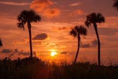 Palmiers dans le coucher du soleil photographie stock libre de droits