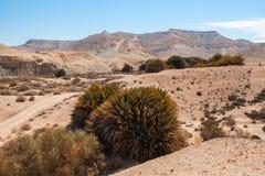 Palmiers dans le désert Photos libres de droits