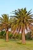 Palmiers dans le jardin Photographie stock libre de droits