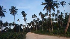 Palmiers dans le mangapwani Zanzibar Image libre de droits