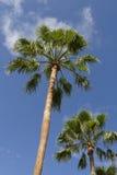 Palmiers dans le paradis Photographie stock