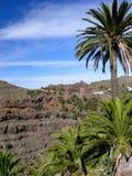 Palmiers dans les montagnes Photographie stock