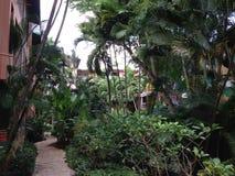 Palmiers dans un hôtel photos stock