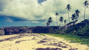 Palmiers dans une baie isolée en Barbade Photographie stock