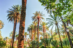 Palmiers dans une station de vacances tropicale au beau jour ensoleillé Photos libres de droits