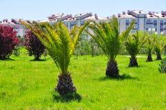 Palmiers dattiers dans le lieu de villégiature Sotchi Photo libre de droits