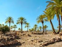 Palmiers dattiers parmi les ruines contre le ciel image libre de droits