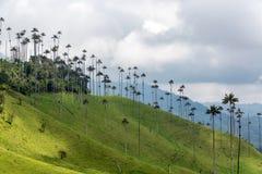 Palmiers de cire sur une colline Photos libres de droits