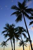 Palmiers de coucher du soleil Images libres de droits