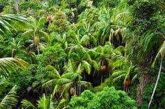 Palmiers de forêt tropicale Image libre de droits