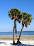 palmiers de la Floride de plage Images libres de droits