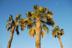 Palmiers de lune de jour Image stock