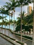 Palmiers de Miami Photographie stock libre de droits