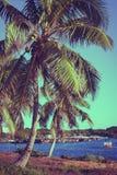 Palmiers de noix de coco Beau paysage tropical, ciel bleu et mer à l'arrière-plan Rétro, filtre de vintage Photographie stock