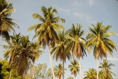 Palmiers de noix de coco contre le ciel bleu Photo libre de droits
