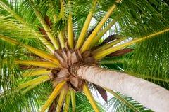 Palmiers de noix de coco contre le ciel bleu Photo stock