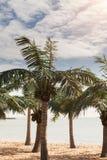 Palmiers de noix de coco sur la plage sablonneuse Plage tropicale avec des palmiers Image stock